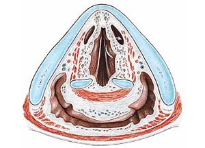 симптомы и лечение ларингоспазма