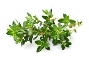 лечебные травы при хроническом бронхите
