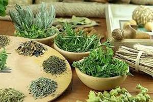 Свойства травы чабрец