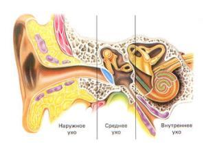 болезни уха человека симптомы