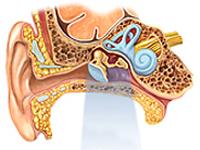 Болезни уха у человека