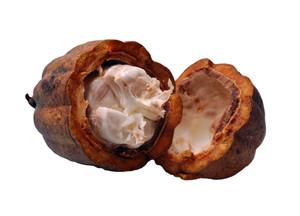 как принимать масло плодов какао от кашля