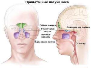 воспаление носоглотки лечение народными средствами