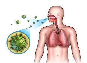 профилактика свиного гриппа 2016