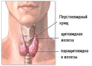признаки щитовидки у женщины фото